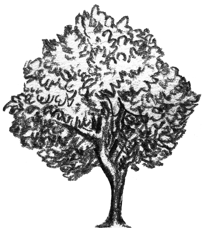 A pencil drawing of a tree.
