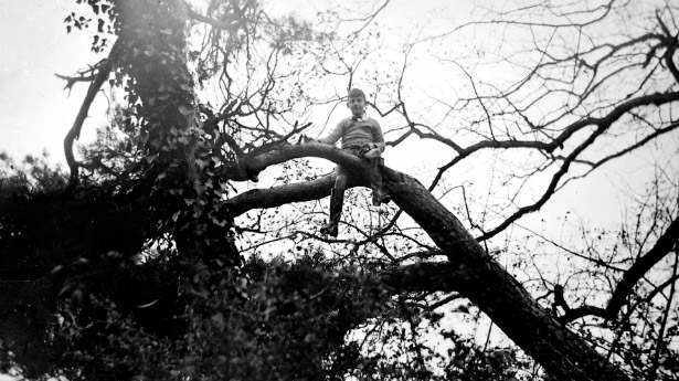 Photograph of a child on a tree.
