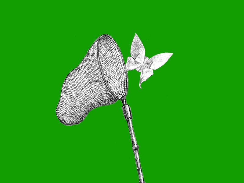 A pencil drawing of a net and origami butterfly on a green background.