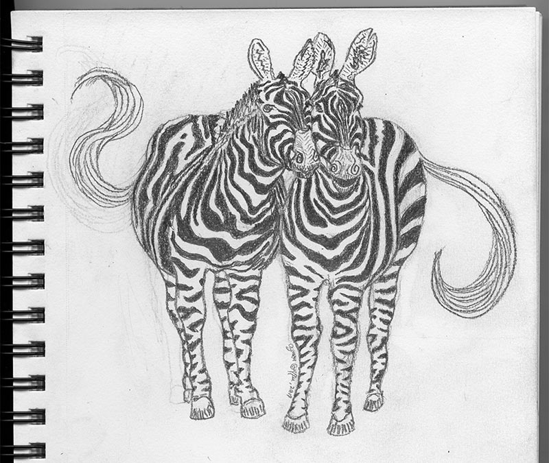 Zebras pencil drawing by Simon Griffee.